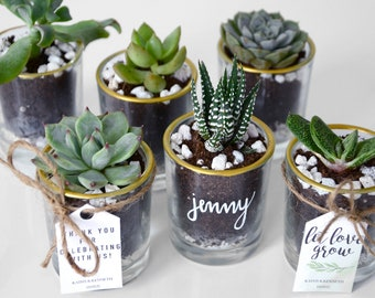 Succulent Wedding Favors/Event Favors for a Rustic Wedding, Garden-Themed Wedding, Whimsical Wedding, Plant-Themed Wedding