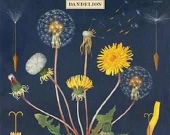 Cavallini Decorative Wrap- Dandelion