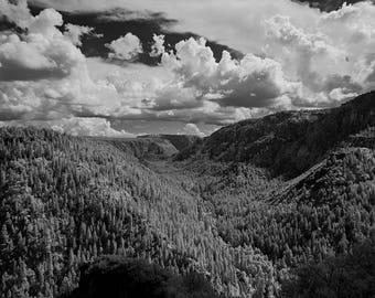 Arizona scenic forest landscape