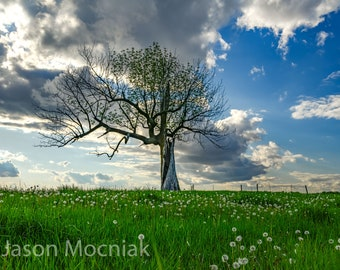 Old Tree Blue Sky Print / Rural Nature Photography / Tree Art