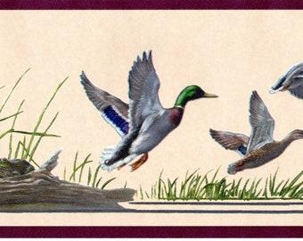 Duck Wallpaper Etsy