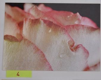 Original flower postcard
