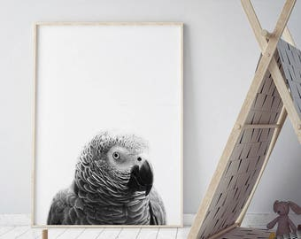 Printable Kids Gift, Parrot Print, Nursery Animal Wall Art, Kids Printable Art