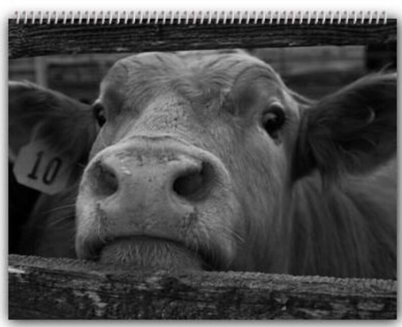 Cow Calendar January 2019 2019 Cow Calendar 11.5'' x 14'' | Etsy