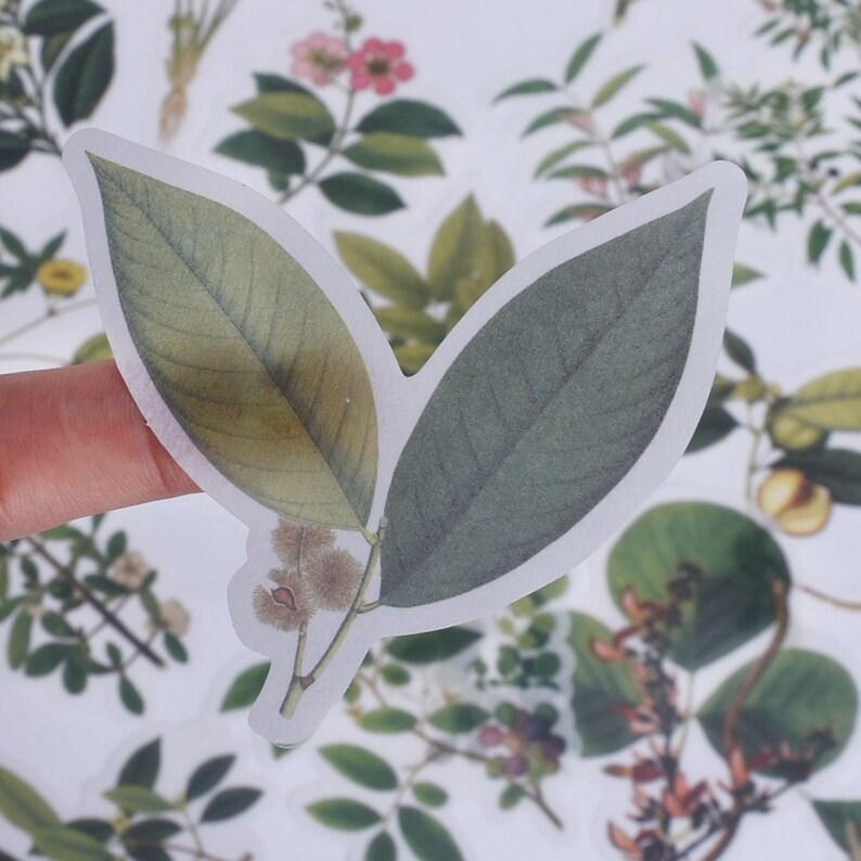 60 Pcs Natural collection Sticker,Planner sticker,Leaf sticker,Scrapbooking Stickers,Flower sticker,sticker pack