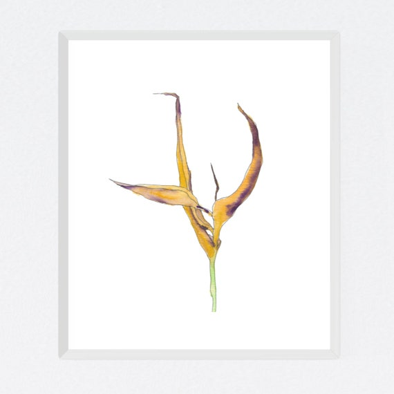Dying Heliconia #1, floral art print, nature, minimalist, flower, archival print, botanical art, giclee on paper, contemporary wall art