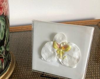 Fantastic pure white Orchid