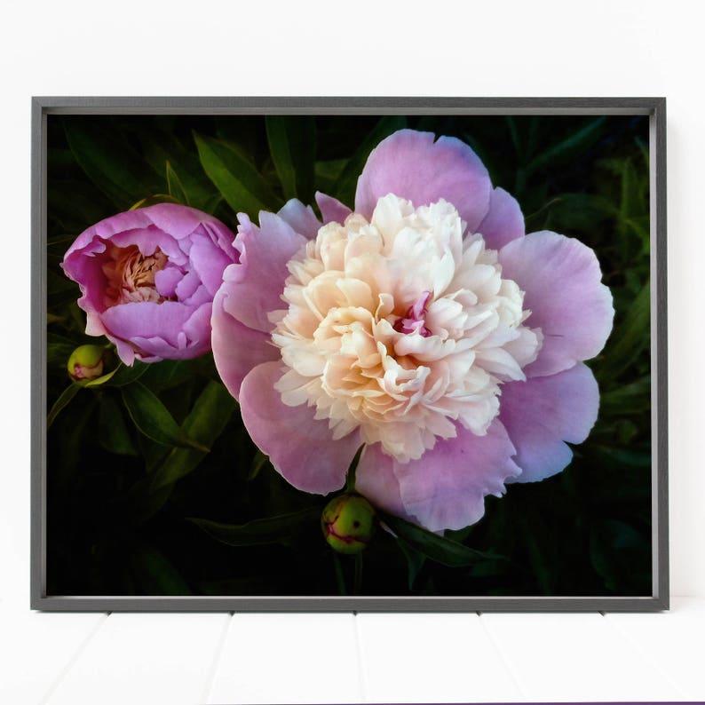 Pink peony flower print flower wall art floral wall art | Etsy