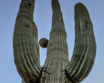Cactus, Saguaro, Southwest, Desert, Landscape, Green, Digital Download