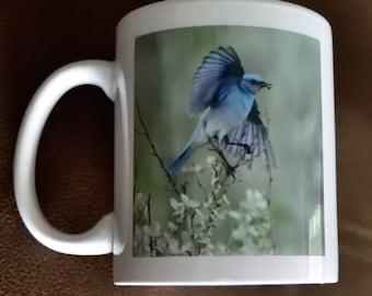 Mountain Bluebird Taking Flight