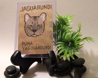 b13eacc693c9 Jaguarundi (Wild Cat Trading Card)