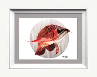 Red Asian arowana, Hand signed art print, Ciclee, Watercolor, color pencil, Fish Art, Aquatic, Animal, Fish Lover