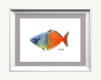Boesemani rainbow, Hand signed art print,  Ciclee, Watercolor, color pencil, Fish Art, Aquatic, Animal, Fish Lover