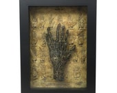 Bizarre! Cursed 6 Finger Six Finger Vintage Monkey Paw Medical Specimen Frame with Spiderwebs