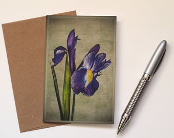 Iris greeting card, floral blank greetings card, birthday card, notecard, mothers day card, thank you card