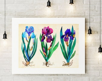Iris Poster, Iris Art Print, Botanical Print, Iris Painting, Iris Picture, Flower Print, Iris Wall Art, Watercolor Iris, Flowers Home Decor