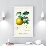 Apple Printable Wall Art, Vintage Botanical Illustration Print, Yellow Fruit Botanical Poster, Antique Kitchen Wall Art, Digital Download
