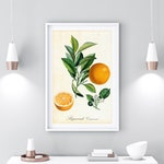 Orange Printable Wall Art, Citrus Botanical Poster, Fruit Print, Kitchen Wall Art, Vintage Botanical Illustration, Digital Download