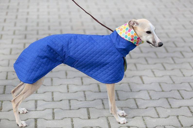 Whippet coat Whippet clothing Spring raincoat for Whippet