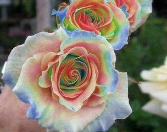 f043d2cb7d8cf 10 Rainbow Rose Seeds Flower Bush Perennial Shrub Garden Home Exotic Home  Yard Grown Party Wedding Bi Color Plumeria Seed Tropical Plant