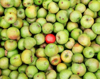 Apples - Fine Are Photography