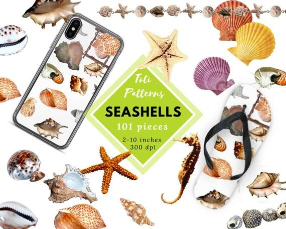 Clip Art Star Seashell