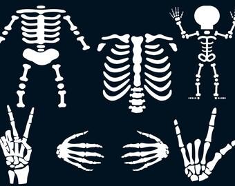 Human body series bones, muscles, and joints dem bones.