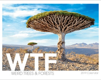 WTF ( Weird Trees & Forests ) 2019 Wall Calendar | Unique Gift | Tree of Life | Trees Art | Stocking Stuffer | Hiker Gift | Hipster Gift