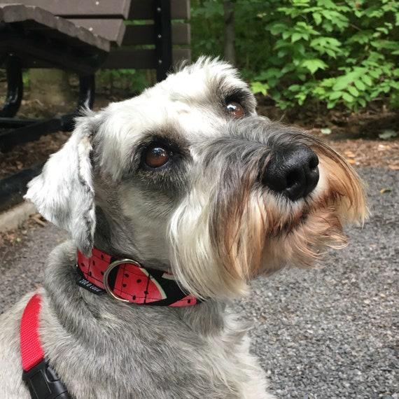 The Pepe Dog Collar