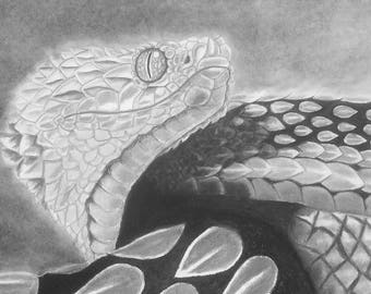 Large 22x28inch (56x72cm) pencil/mixed media black & white drawing of an African Bush viper on poster board