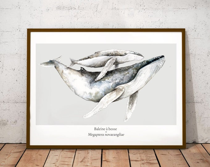 poster whale ocean watercolor minimaki decoration zoology