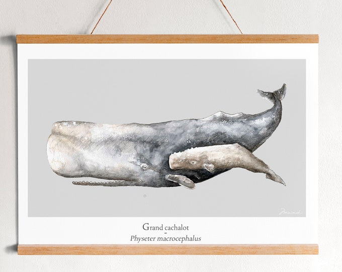 poster poster Sperm whale ocean watercolor minimaki decoration zoology