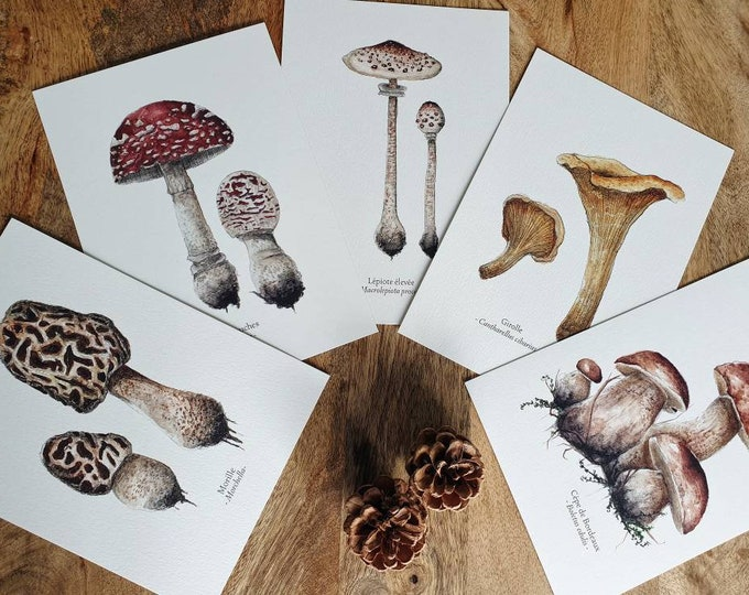 Lot mushroom cards foret A5 watercolor vintage botanical plank