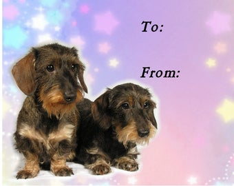 Dachshund (Wirehaired) Dog Gift Labels, Peel Off, Self adhesive, 2 Sheets of 21 Labels, 42 Labels in total