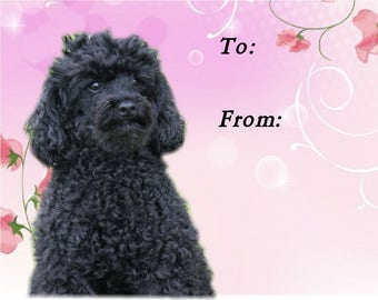 Poodle Dog Gift Labels, Peel Off, Self adhesive, 2 Sheets of 21 Labels, 42 Labels in total