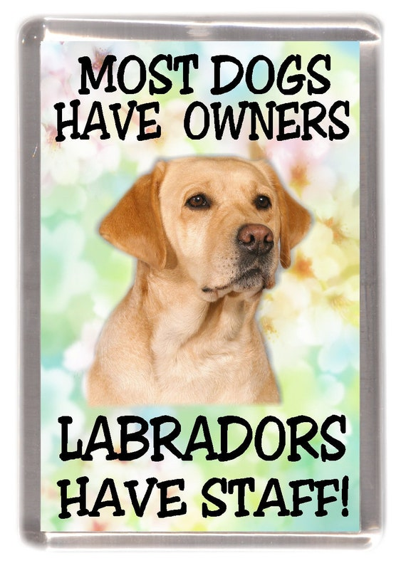 "Yellow Labrador Fridge Magnet /""Most Dogs Have Owners Labradors Have Staff!/"""