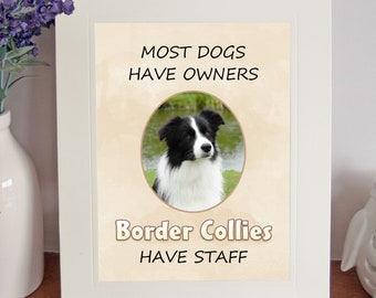 "Border Collie 10"" x 8"" Free Standing 'Border Collies Have Staff' Picture Mount Fun Novelty Gift"