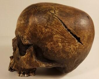 Edd - Ancient Skull