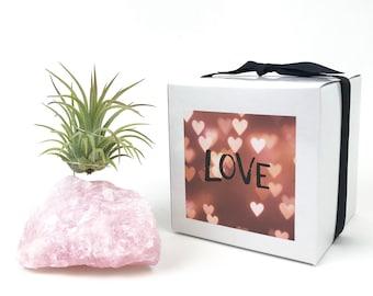 Rose Quartz, Air Plant, Gift for Her, Gift Women, Bedroom Decor, Housewarming Gift, Office Decor, Bohemian, Minimalist, Crystal, Geode