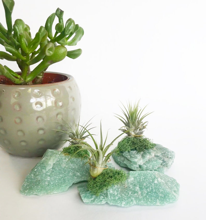 Amazonite Crystal Zen Garden Air Plants Fairy