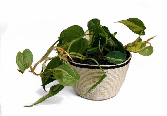Handmade Natural Rope Storage Basket, Sustainable gifts