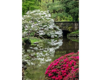 Dogwood & Azaleas at Shofuso Japanese Gardens Photograph Matted to 12 X 20