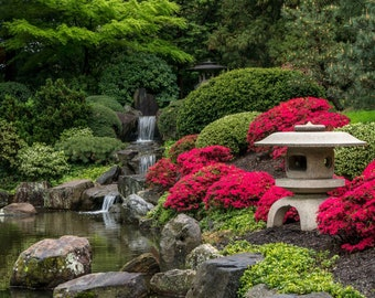 In the Shofuso Japanese Garden  Photograph Matted to 12 X 12