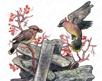 Cedar Waxwing Painting, Digital Print, Watercolor Illustration, Multiple Sizes Available
