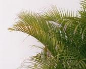 Jamaica Palm Print 8x10, 11x14, 16x20