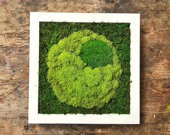 """Real preserved small moss art, modern handcrafted white frame, 8.5"""" x 8.5"""", Home decor, office decor, no maintanence"""
