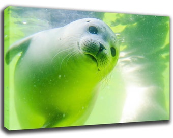 Nursery Wall Art Baby Seal Print Poster Canvas/Glossy HD Canvas, Gallery Wrap Or Glossy Poster