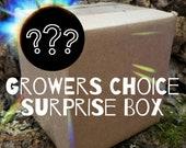 Growers Choice Surprise Box - Air Plants, Air Plant Variety Pack, Tillandsia, Air Plant, Indoor Plant, House Plant, Terrarium Plant