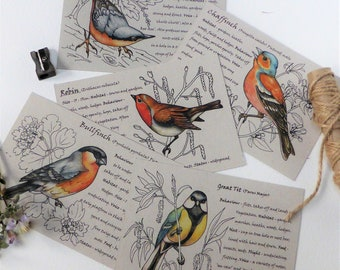 Pack of 5 Garden Birds postcards  - bird spotter - gifts for him - eco friendly - recycled - Fathers Day gift ideas