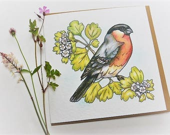 Bullfinch - garden birds - greetings cards - nature lover